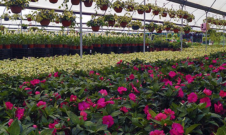 10 cosas que hacer en atlixco puebla dos 22 for Plantas que hay en un vivero