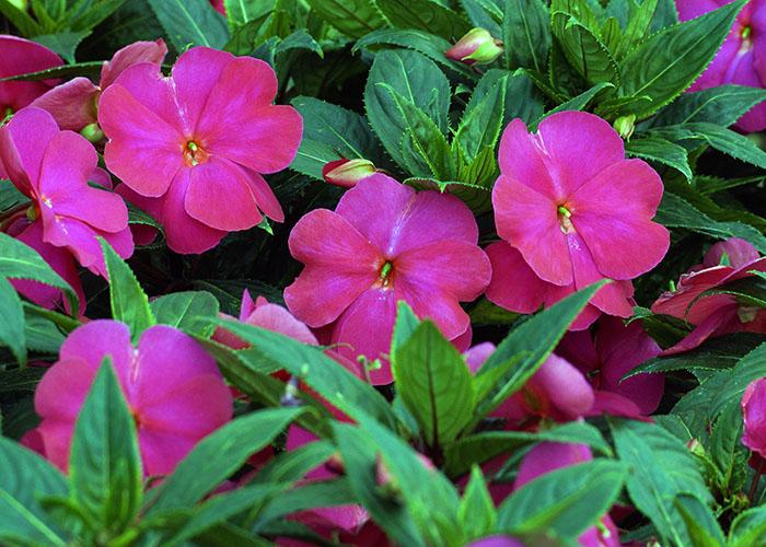 Cat logo floresa viveros de atlixco puebla www for Viveros de plantas en buin